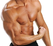 Muscles After Steroids